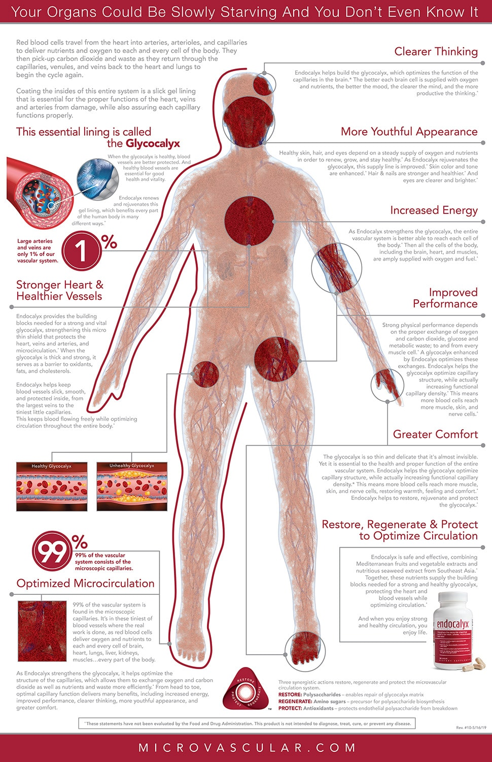 Functions-of-glycocalyx--health