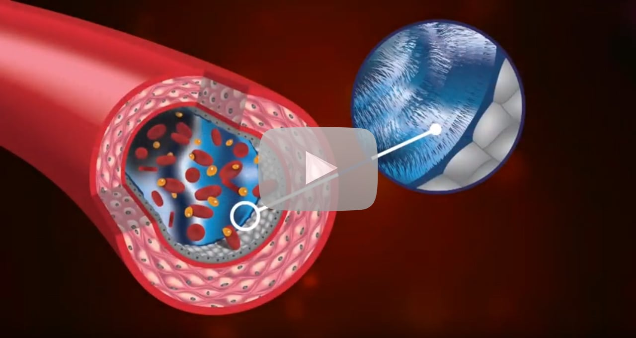 Endocalyx Anti-Aging Supplement | Regenerate Glycocalyx Function