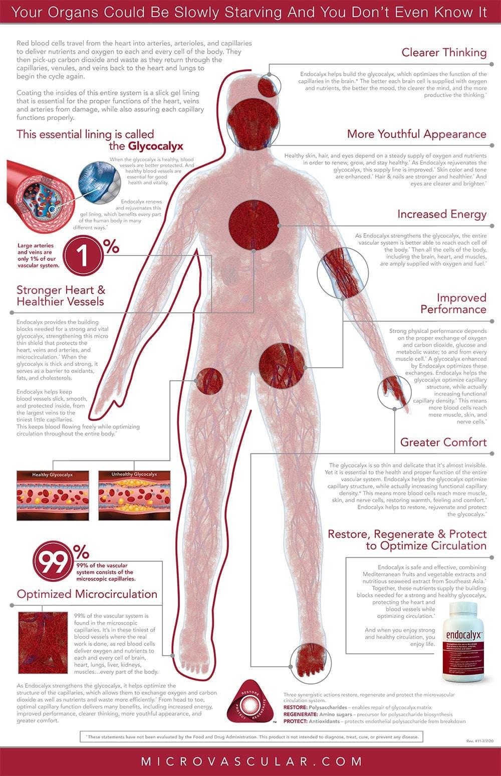 Microvascular-man-22x34poster-jul20-1-MV-Red-Label